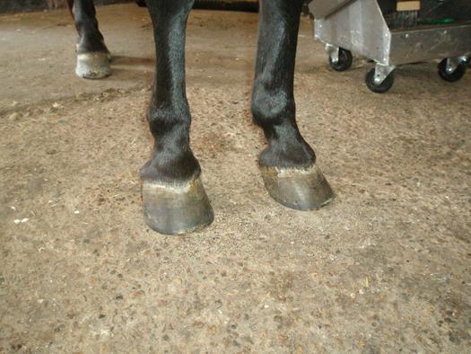equine fusion sko